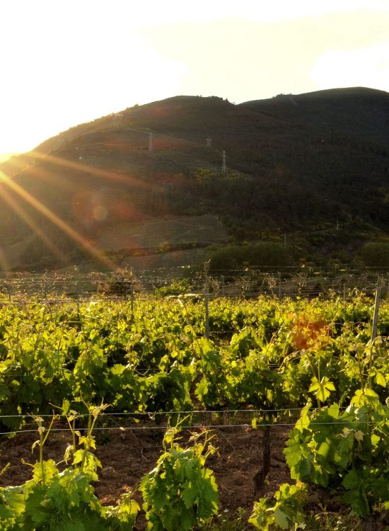 vineyard-2332218_1920